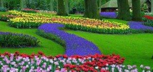 موضوع تعبير عن الربيع و الطبيعة.jpg